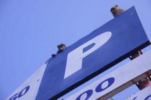 Affen überwachen die Schilder
