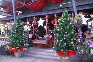Weihnachtsbäume und Sterne
