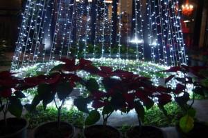 Weihnachtssterne am Fuß des Lichterkettenbaums