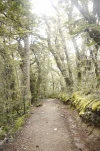 Abstieg im Mooswald
