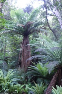 Farn-Bäume