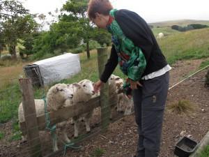 Ina und Schafe