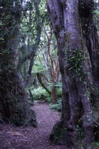 Südlicher Regenwald