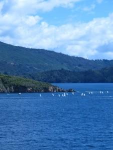 Segelrennen auf der Überfahrt nach Wellington