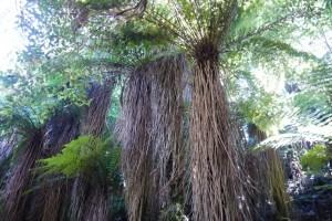 Regenwald mit Farnbäumen