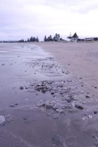 Waikanae Beach in Gisborne